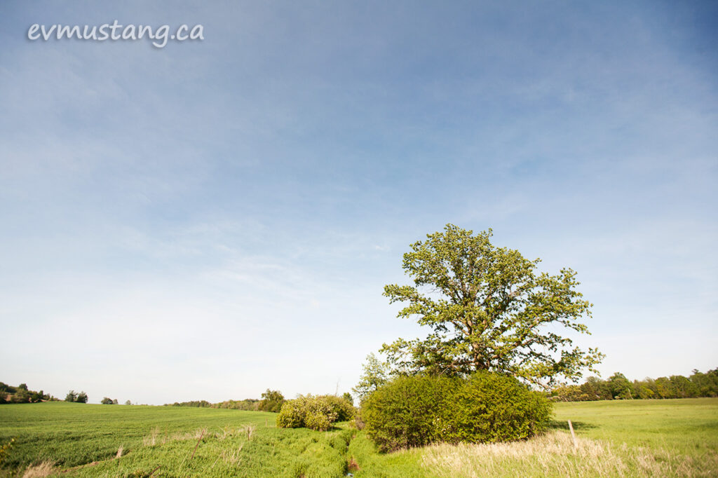 image of spring tree near brook under whispy clouds in blue sky