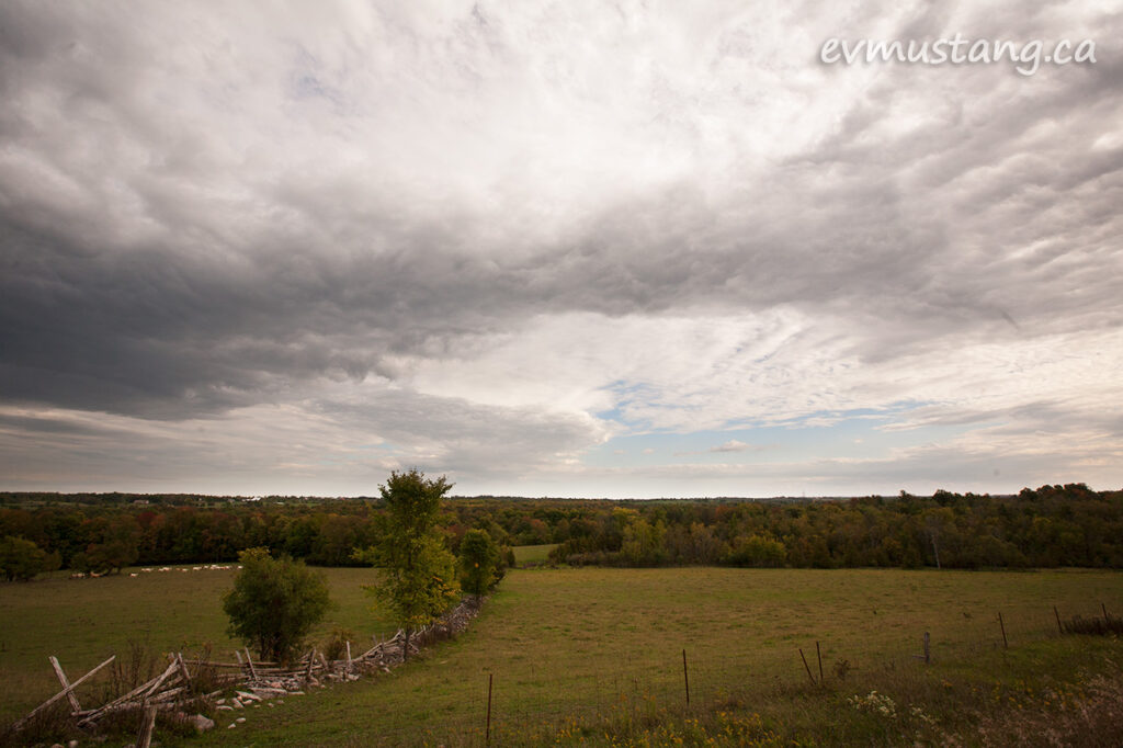 image of a cow pasture with trees along the north side and mottled grey clouds above