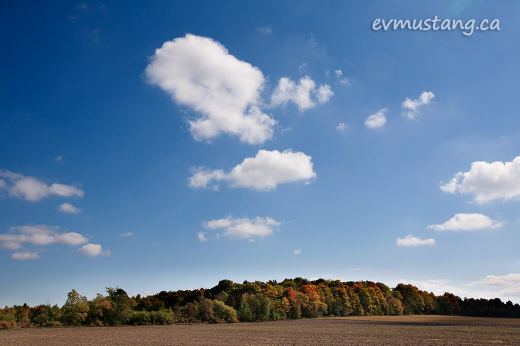 image of a field lined by colourful trees under a blue sky with three puffy white clouds