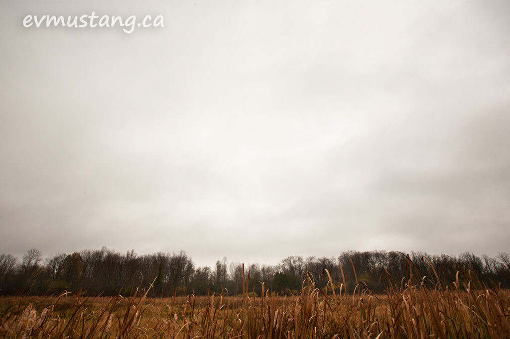 image of a marsh land under a grey sky