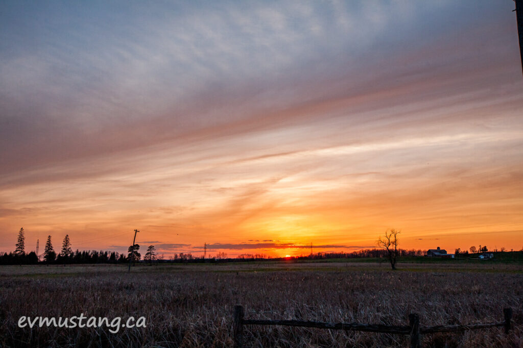 image of an orange, pink and blue sunset over a farm field full of redwing blackbirds