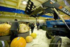 12_giant_pumpkin_move