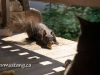 image of britches the squirrel nabbing a peanut with lefty the cat looking placidly on