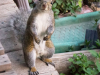 image of spats the grey squirrel stading up on his hind legs imploring you for a peanut.