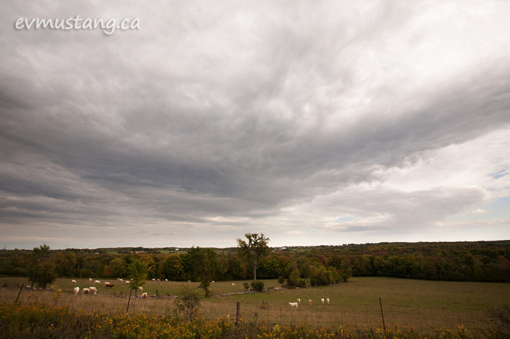 image of cows in the distance in a treed pasture under a large rain cloud