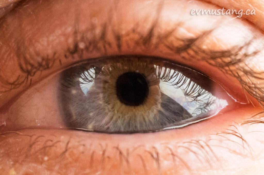 macro image of michael's eye